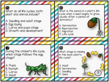 Life Cycles Task Cards {QR Code Answers}