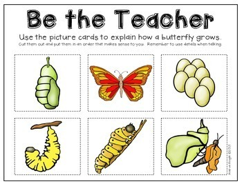 Life Cycles:  The Butterfly  {Books and Activities for K-2}