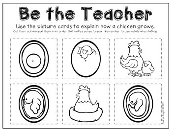 Life Cycles:  The Chicken  {Books and Activities for K-2}