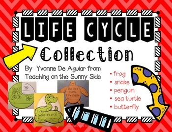 Life Cycle Projects, Posters, and More