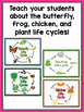 Life Cycles Activities & Lesson Plans for Preschool, Kindergarten, or 1st Grade