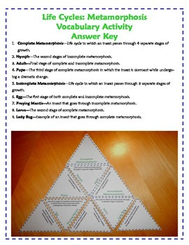 Life Cycles Vocabulary Triangles Activity