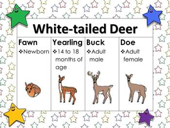 White-tailed Deer Life Cycle (Fawn, Yearling, Buck and Doe) Matching Game Sort