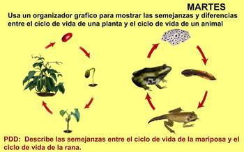 Life Cycles and Metamorphosis Review - SPANISH VERSION