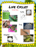 Life Cycles for Google Docs - A Distance Learning Activity