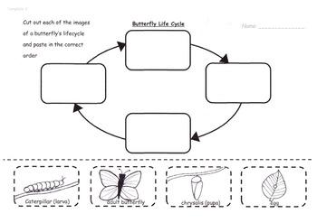 Life Cycles mini unit