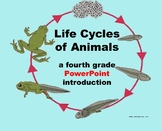 Life Cycles of Animals - A 4th Grade PowerPoint Introduction