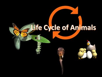 Life Cycles of Animals Animated PowerPoint Readers' Theater