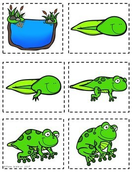 Life Cycles of Frogs, Chickens, and Fish for K, 1st, and 2nd Grade
