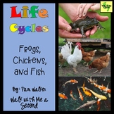 Life Cycles of Frogs, Chickens, and Fish for K, 1st, and 2