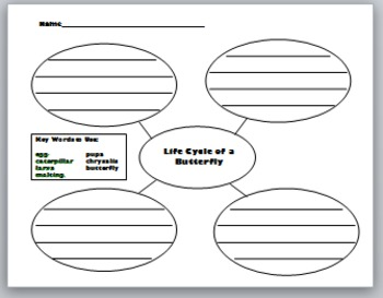 Life Cycle of a Butterfly Graphic Organizer