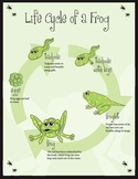 Life Cyle of a Frog