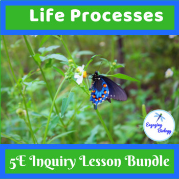 The Seven Life Processes Worksheets & Teaching Resources | TpT