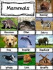 Life Science - All Kinds of Animals