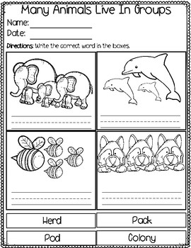 Life Science Animals That Live In Groups