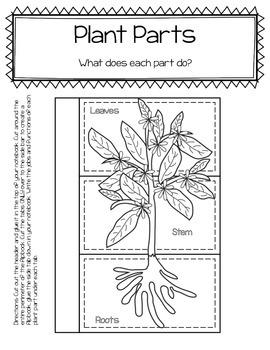 Life Science Bundle 1: 35 pages- foldables, close reading, comprehension & more!