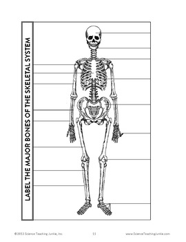 Life science human body for interactive notebooks tpt life science human body for interactive notebooks ccuart Image collections