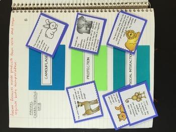 Animal Diversity: Vertebrates - Life Science Interactive Notebook