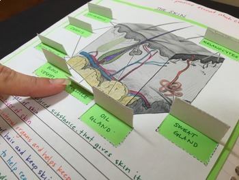 Human Body Part 1: Life Science Interactive Notebook