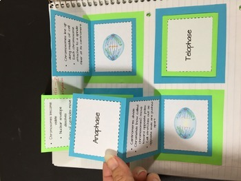 Photosynthesis, Cell Process & Energy: Life Science Interactive Notebook