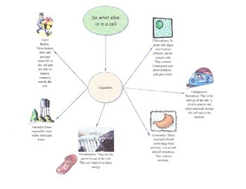 Life Science Part I Graphic organizers (Meets All State an