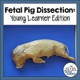 Fetal Pig Dissection Lab Activity for Upper Elementary Students