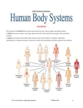 Life Science Review: Human body systems