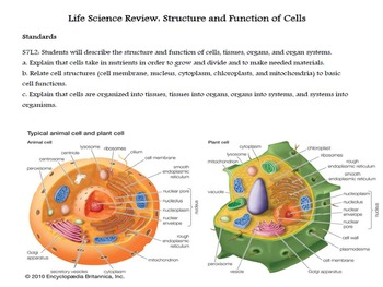 Life Science Review-Structure and function of cells