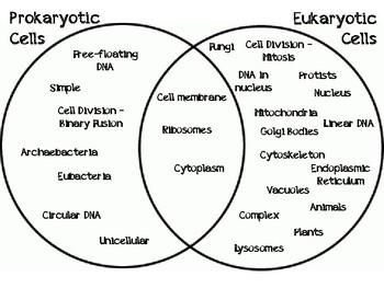 Life Science Venn Diagram Manipulatives