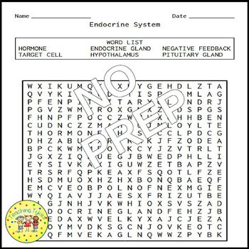 Endocrine System Word Search