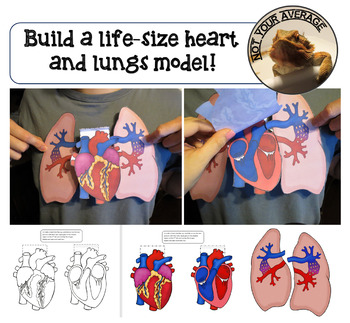 Life Size Heart and Lungs Paper Model Printable Pulmonary