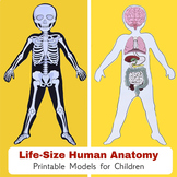 Life-Size Human Body Anatomy Paper Models: 6 Body Systems (Skeleton and Organs)