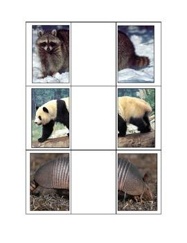 Life Skills: Animal Halves