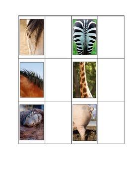 Life Skills: Animal Parts