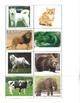 Life Skills- Animal Picture Match (generalizing) file folder