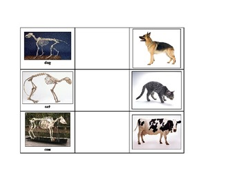 Life Skills: Animal Skeletons