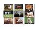 Special Education: Animals - Wild vs. Domestic (sorting)