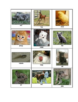 Life Skills: Animals and Their Babies (Book)
