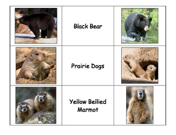 Special Education: Colorado Animals and/or Mountain Animals Match