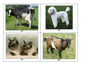 Life Skills: Domestic Animals
