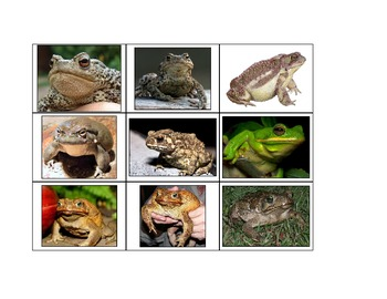 Life Skills: Frogs vs. Toads