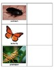 Life Skills: Insect Match