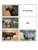 Life Skills: Kenyan Animals