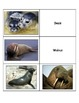 Life Skills: Marine Animals