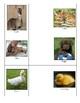 "Life Skills: Match ""Infant"" Animals to Adult Animals"