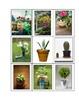 Life Skills: Plants vs. Flowers