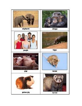 Life Skills: Reptiles vs. Mammals