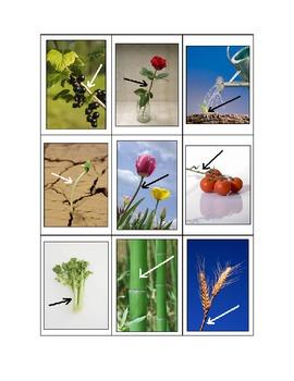 Life Skills: Roots vs. Stems