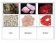 Life Skills: Stones and Gems