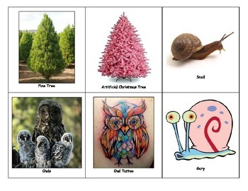 Special Education: Things that Grow vs. Things that Don't